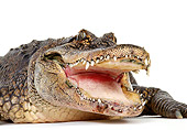 REP 07 RK0002 09