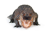 REP 07 RK0003 05