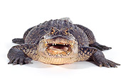 REP 07 RK0003 12
