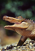 REP 07 RK0005 54
