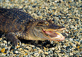REP 07 RK0008 10