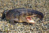 REP 07 RK0008 29