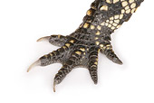 REP 07 RK0014 01