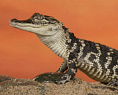 REP 07 RK0017 01