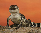 REP 07 RK0018 01
