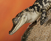 REP 07 RK0020 01