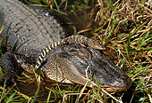 REP 07 TL0002 01