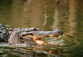 REP 07 TL0004 01