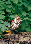 REP 08 GL0001 01