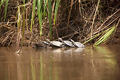 REP 08 JE0001 01