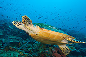 REP 08 JM0007 01