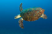REP 08 JM0008 01