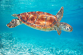 REP 08 KH0004 01