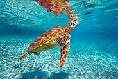 REP 08 KH0005 01