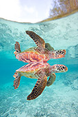 REP 08 KH0007 01