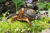 REP 08 LS0009 01