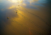 REP 08 MH0008 01