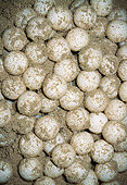 REP 08 MH0011 01