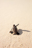 REP 08 MH0015 01