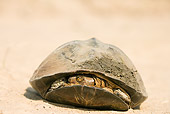 REP 08 WF0002 01