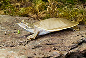 REP 08 WF0004 01