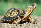 REP 08 GR0001 01
