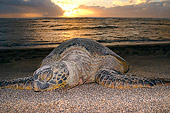 REP 08 JM0002 01
