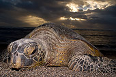 REP 08 JM0003 01