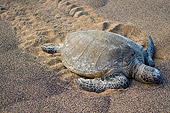 REP 08 JM0006 01
