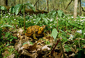 REP 08 LS0001 01