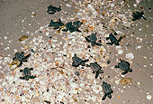 REP 08 LS0006 01