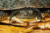 REP 08 LS0007 01
