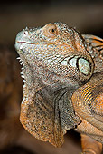 REP 09 GL0001 01