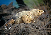 REP 09 GL0003 01