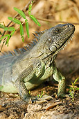 REP 09 MC0001 01