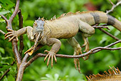 REP 09 MC0002 01