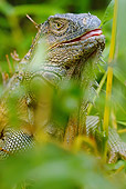REP 09 MC0003 01