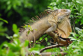REP 09 MC0004 01