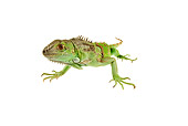 REP 09 MH0006 01