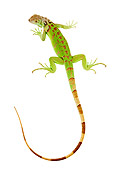 REP 09 MH0007 01
