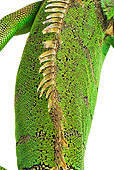 REP 09 MH0008 01