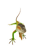 REP 09 MH0009 01