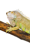 REP 09 RK0003 03