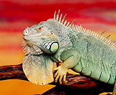 REP 09 RK0009 15