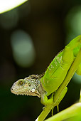 REP 09 WF0001 01