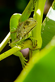 REP 09 WF0002 01