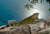 REP 09 DB0004 01