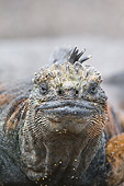 REP 09 NE0003 01