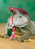 REP 09 RC0001 01