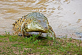 REP 11 GL0003 01